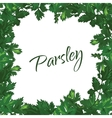 Parsley on a white background green frame of vector image