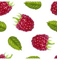 realistic detailed ripe red raspberry berry vector image