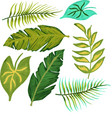 tropical jungle leaves set of vector image