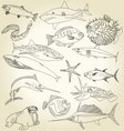 ocean life vector image vector image