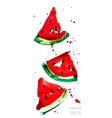 slices watermelon vector image vector image