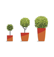 Tree round shape in pots isolated on white vector image vector image