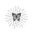 butterfly with sunburst vector image vector image