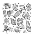 cedar cone background sketch for your design vector image vector image