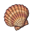 Colorful saltwater scallop sea shell isolated vector image vector image