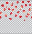 falling rose petals on transparent background vector image