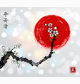 sakura cherry branch in white blossom and red sun vector image vector image