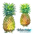 Watercolor painting fresh pineapples vector image vector image