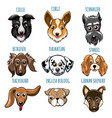 various dog head set vector image