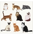 Breed cats in different poses Cartoon vector image vector image
