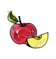 ink drawing apple vector image vector image