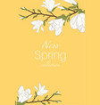 magnolia tree branch flowers bloom blossom buds vector image vector image