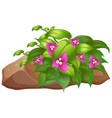 pink flowers with green leaves on white background vector image vector image