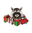 christmas raccoon funny animal with gift boxes vector image vector image