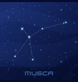 constellation musca fly night star sky vector image vector image