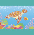 sea turtle on a reef vector image vector image