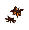 anise seed isolated icon vector image vector image
