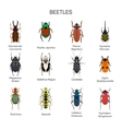 Bugs set in flat style design Different vector image vector image