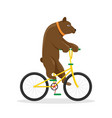 circus bear on a bicycle vector image vector image