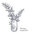 drawing rosemary essential oil vector image vector image