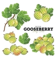 Gooseberry Set vector image vector image