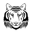 muzzle a tiger isolated on wgite background vector image