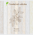 pure essential oil collection pistachio wooden vector image vector image