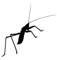 strange insect silhouette vector image vector image