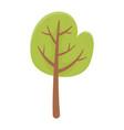 tree foliage vegetation nature botanical isolated vector image vector image