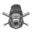 vintage angry gorilla head in beanie hat vector image vector image