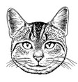 cat hand drawn image vector image vector image