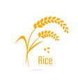 Cereal icon with rice vector image vector image