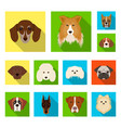 dog breeds flat icons in set collection for design vector image