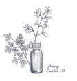 drawing moringa essential oil vector image vector image