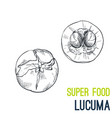 lucuma super food hand drawn sketch vector image vector image