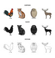 rooster tiger deer owl and other animals vector image