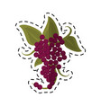 cartoon bunch grape wine icon vector image