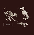 halloween holiday of animal skeleton vector image