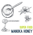 manuka honey super food hand drawn sketch vector image vector image