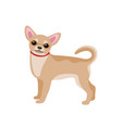small dog isolated on white vector image
