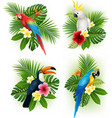tropical flower and bird collection set vector image
