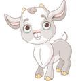 baby goat vector image