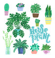 collection of decorative houseplants isolated on vector image