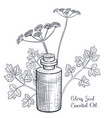 drawing celery seed essential oil vector image vector image