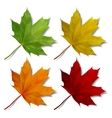 set realistic maple leaves vector image vector image