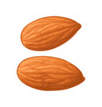 two whole almonds nuts without shell color vector image