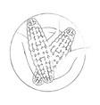 corn vegetable icon vector image vector image