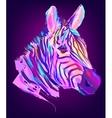 cute colored zebra head vector image