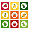 icons tropical fruits on colored background vector image vector image