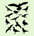 seagulls dove pigeon crow silhouette vector image vector image